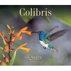 Colibris 2019