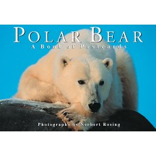 Polar Bear: A book of postcards