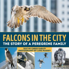 Falcons in the City: The Story of a Peregine Family